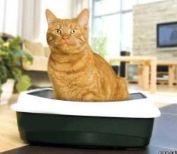 Безопасная уборка кошачьего лотка с пробиотиками Тилайн