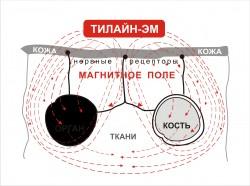 Импульсное магнитное поле аппарата ТИЛАЙН-ЭМ