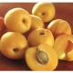 Масло абрикоса. Компонент кремов Тилайн/TiLine